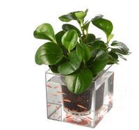 15*15cm,big Modern flowerpot resin plastic flower pots fish pot plants Desktop fish tank Transparent Fashion