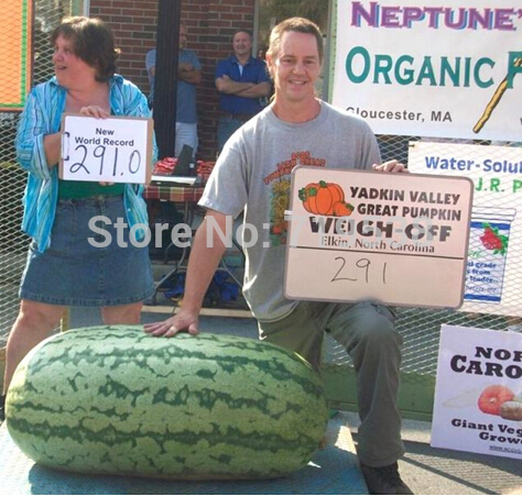 Fruit seeds 10 seeds Giant Watermelon Seeds- HUGE 200 lbs,Home gardening, !