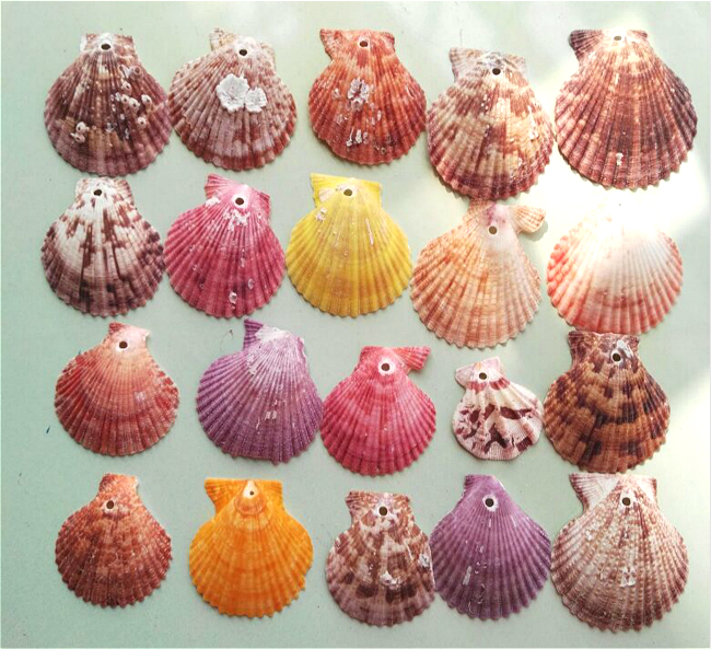 10pcs Diy Hole-digging Shell Wind Chimes Diy Natural Conch Shell Scallop Multicolour Shell Wall Stickers