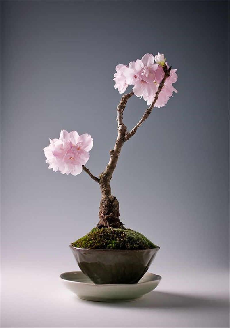 Nadir Japon sakura Kiraz Çiçeği Bahçe Çiçek Bonsai Ağacı Kapalı çiçekler bitkiler Kolay Büyümek 50 adet Çiçek Saksıları Yetiştiricilerinin