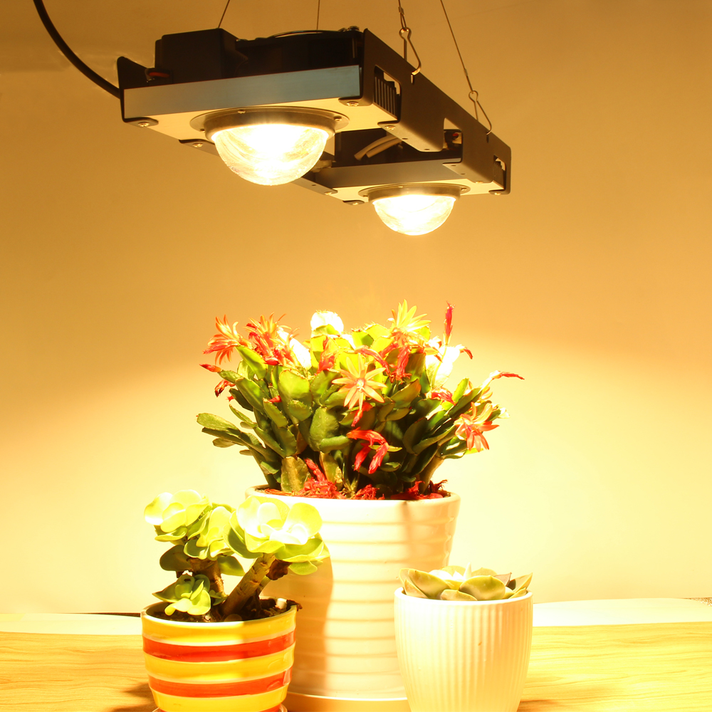CF élèvent la lumière 200 W 300 W CREE CXB3590 et la plante de LED de citoyen élèvent la lampe pour la tente d'intérieur serre l'usine hydroponique