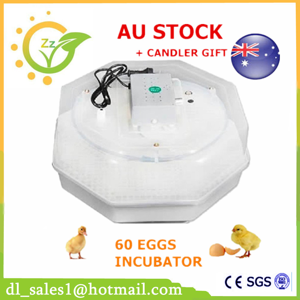 1 Pcs Chicken Hen Duck Egg Incubator Digital 60 Eggs Incubator Poultry Incubator Machine 60 eggs incubator new design jn5 60 mini egg incubator poultry hatcher egg chicken quail duck incubator