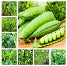 2019 big promotion ! 20PCS Dutch beans vegetable plant peas green healthy vegetables potted home garden planting free shipping(China)