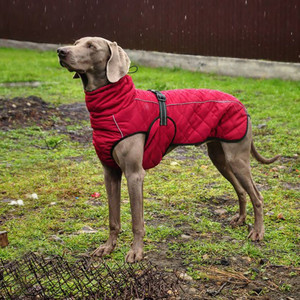 Image 1 - Wholesale Pet Clothes Jacket For Dog Winter Dog Clothes Red Clothing For Dogs Golden Retriever Waterproof Large Dog Jacket Black