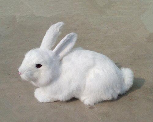 תוצאת תמונה עבור ארנב לבן