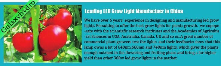estufa jardim interior comercial planta de crescimento da flor vegetal crescer luzes