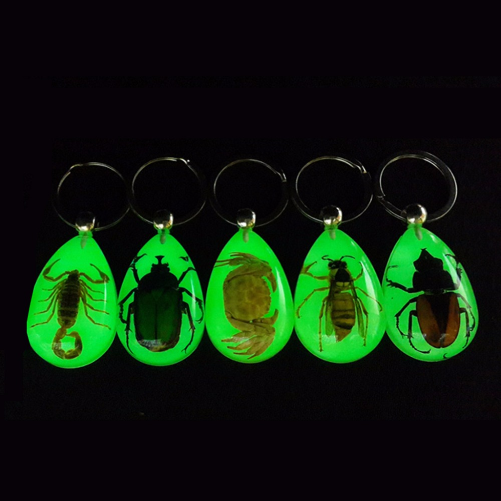 JAVRICK Trend Natural Glow-in-the-Dark Real Insect Keychain Beetle Animal Specimens Collecting Hot 2018