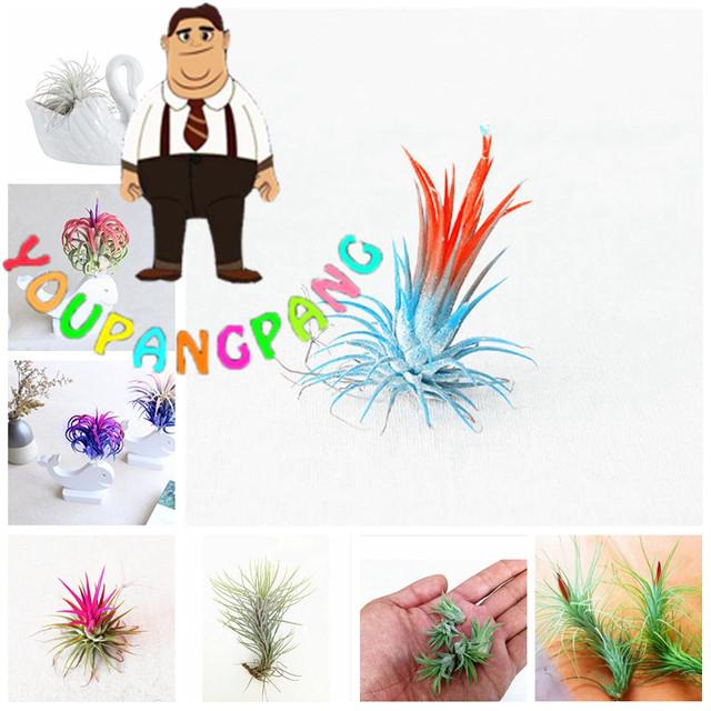 120pcs Rare Airplants Lazy bonsai Air Freshening Plants Beautiful Flowers Office Desk planting For Flower Garden Easy Grow