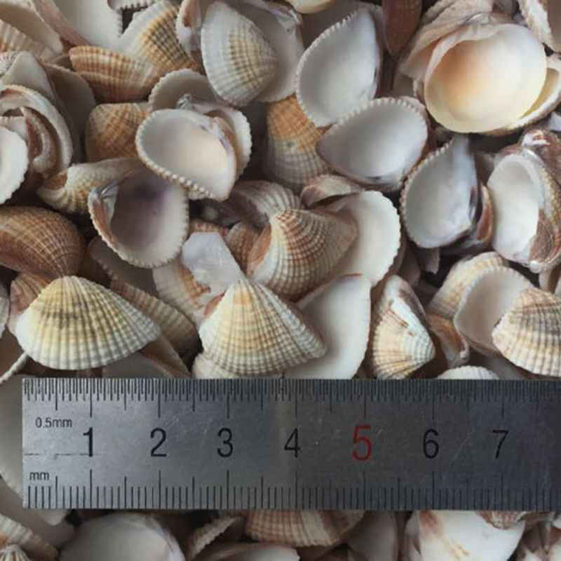 Natural Shell Decoration Home Garden Decoration Crafts Conch