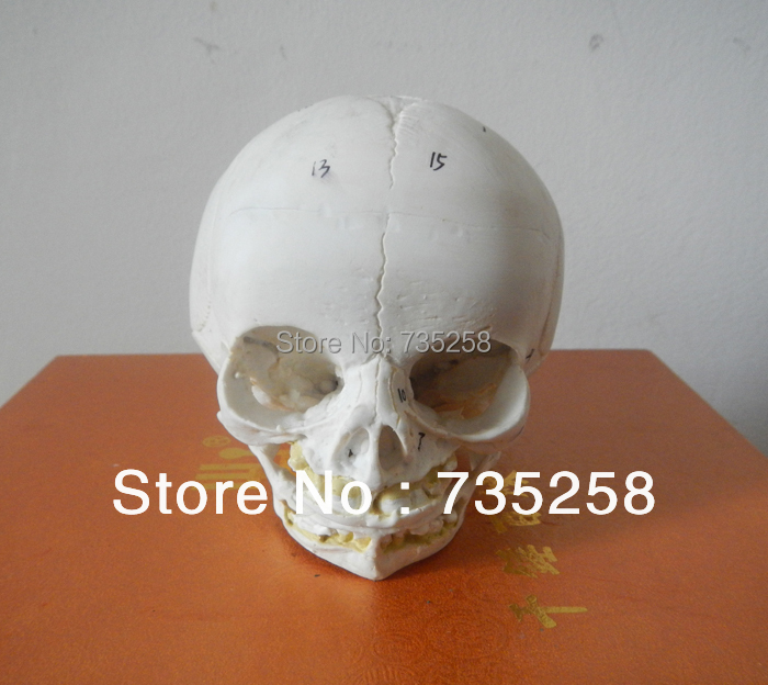 Senior Baby Skull Model,Fetal Skull Model,Baby Skull Simulation Model female pelvic fetal model nine months of pregnancy fetus uterine embryo development model fetal development model gasen sz017