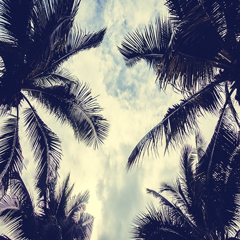 Cloud Palm Tree photo backdrop Vinyl cloth High quality Computer printed wall photo studio background