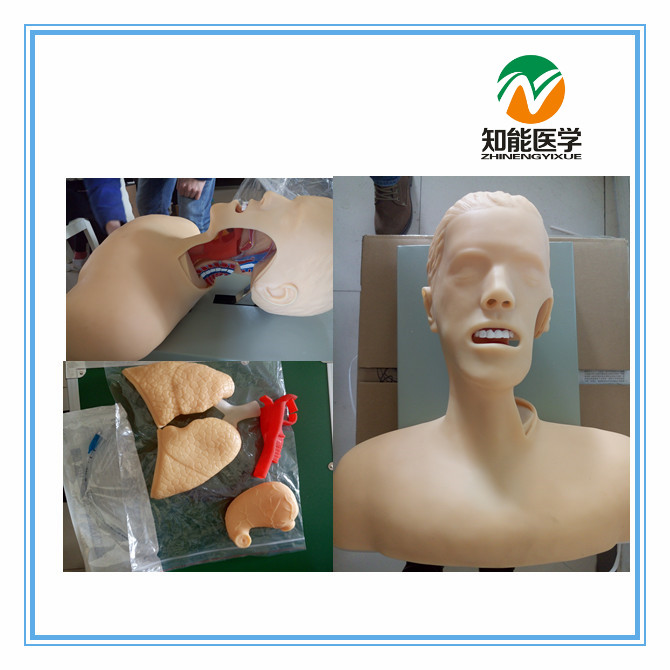 Hot sale BIX-J51 Electronic Airway Lntubation Model(With Alarm Device) WBW079 bix j5s airway lntubation manikin teeth compression alarm device trachea cannula model wbw003