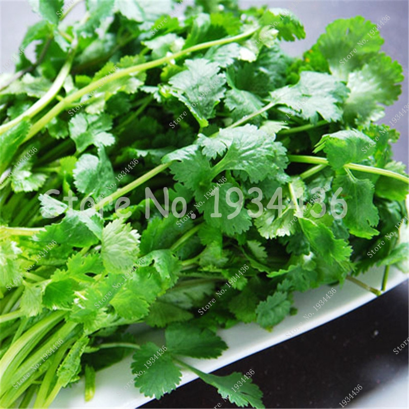 top 10 largest spice importers coriander list and get free shipping