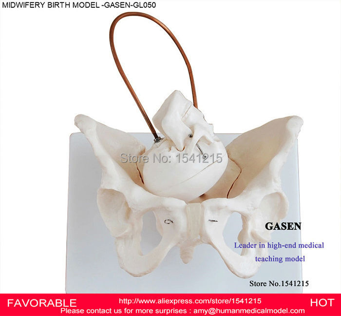 LATEST SIMULATION OF THE FETUS CHILDBIRTH MIDWIFERY TEACHING MODEL WOMEN GIVING BIRTH MIDWIFERY CHILDBIRTH MODEL GASEN-GL050 hot midwifery teaching model birth demonstration model pelvis with fetal head skull model