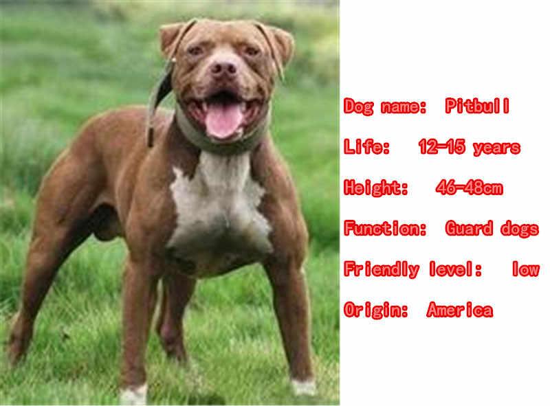 2019 Dễ Thương Pitbull Dog Động Vật Ví Túi Xách Quyến Rũ Handmade Mặt Dây Chuyền Keychain Cho Túi Xe Phụ Nữ Người Đàn Ông Vòng Chìa Khóa Tình Yêu Đồ Trang Sức k057