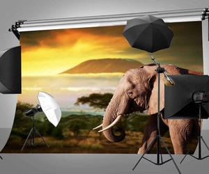 Image 2 - Dusk Grassland Background Old Elephant Natural Scenery Children Photo Studio Backdrop 150x220cm Photography Backdrops Wall
