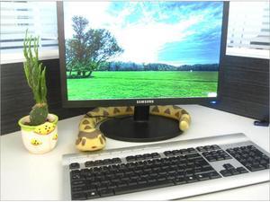 Image 5 - قطعة واحدة RC الحيوانات rattlesnake ، ثعبان التحكم عن بعد 75 سنتيمتر طويلة ، أطفال juguداعي للاهتمام حذاء رياضة ، بطارية ألعاب تتحرك