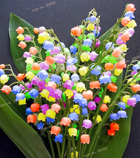 10 pcs Lily of the Valley flower seeds , bell orchid seeds,rich aroma ,bonsai flower seed, so cute and beautiful