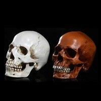 Homosapiens Skull Statue Figurine Human Shaped Skeleton Head Demon Home Decor