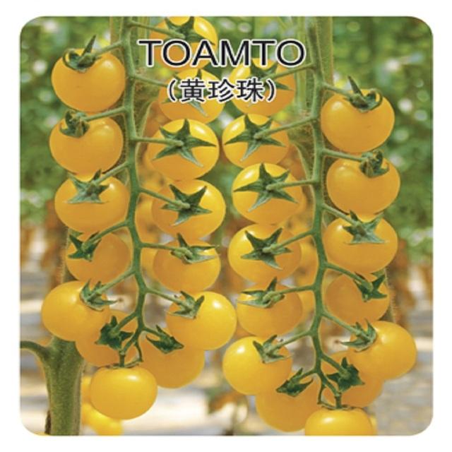 Yellow Tomato Seeds, 200pcs/pack
