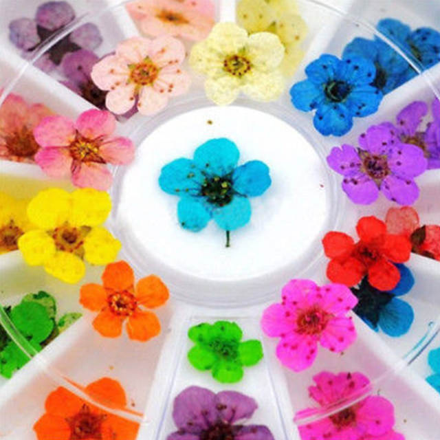 36pcs 12 Color Wheel Elegant Nail Art Decor Real Dried Flowers For