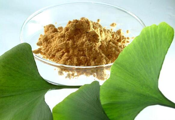 hot selling 1000g/lot 100% pure Natural Ginkgo Biloba Extract Powder 50:1 with best price