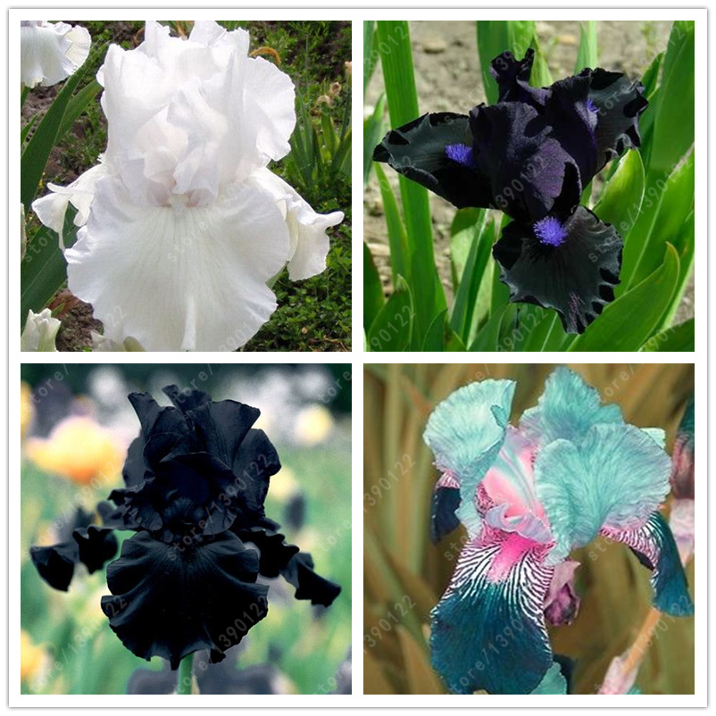 orchidée intérieur-achetez des lots à petit prix