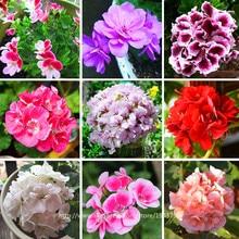 100 pcs Rare Geranium seeds,17 Colors Perennial Flower Seeds Pelargonium Peltatum Seeds available ,bonsai potted flower plant