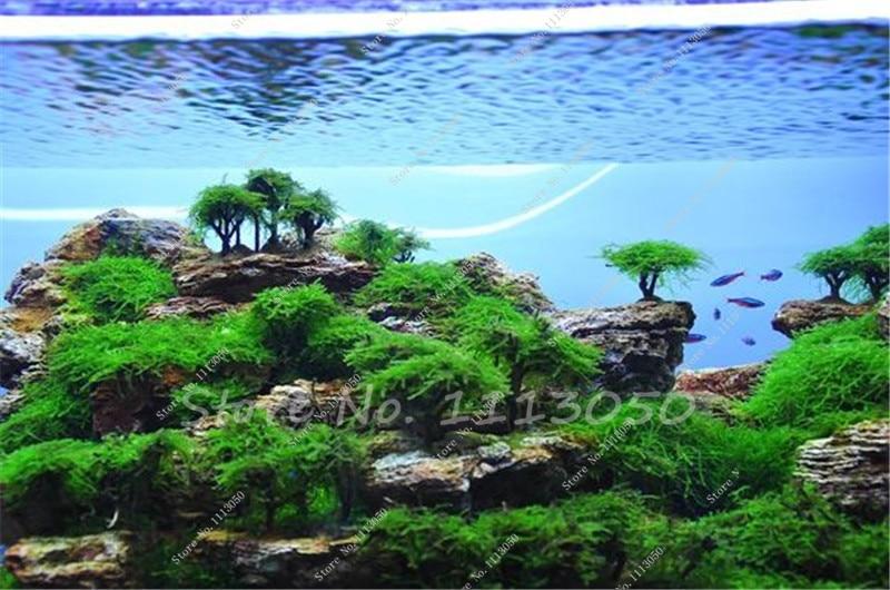 Aquarien dekoration aqua della bonsai ohne bl tter 22 x Kuba dekoration