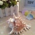 Grande concha shell manualidades acessórios do aquário paisagem conchas do mar decoração estilo mediterrâneo home decor