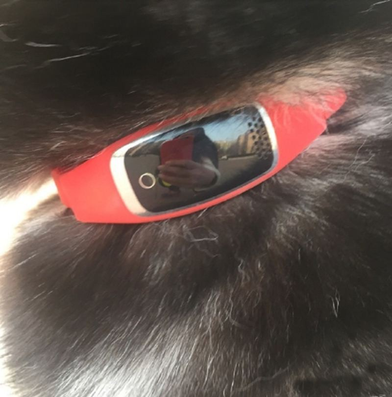 Waterproof Silicon Pets Collar GPS Tracker Real time Locator