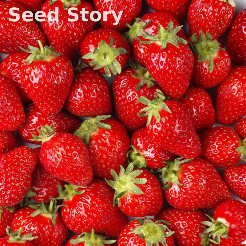 100pcs/lot Rare Color Purple Red Strawberry Seeds Cherry Berry Fruit Seeds Rare And Decilious Fruit Home Garden Potted Seed Sale