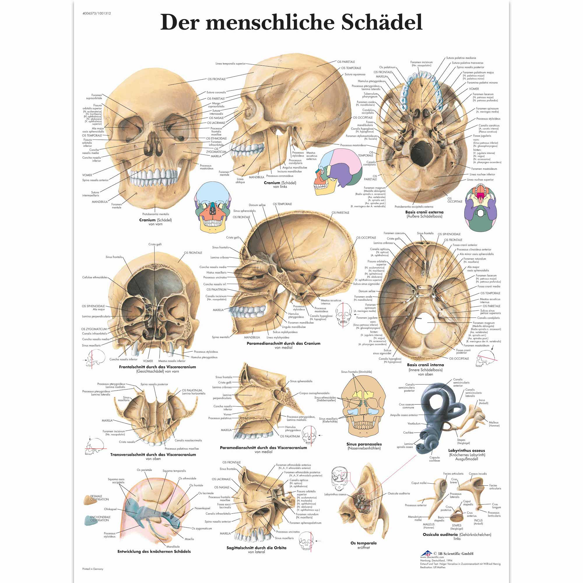 Anatomy Pathology Anatomical Poster Ear Acupuncture Chart Classic ...