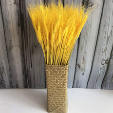 100pcs Natural Wheat Dried Flowers Primary Colors Garden Organic Real Wedding Decor Boutonniere Headpieces Woven Wreath B4