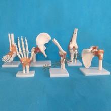 6 шт суставная модель скелета плечо, локоть, запястье, бедра, колено и лодыжки модель суставов человеческая модель скелета
