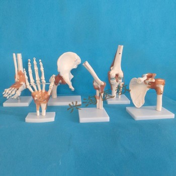 6pcs joint skeleton model Shoulder, elbow, wrist, hip, knee and ankle joints model human model skeleton