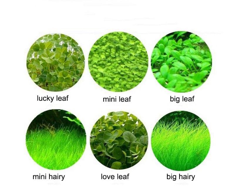 Water Grass Seed Aquarium Aquatic Plants Seeds Easy Planting Fish Tank Landscape Ornament Lawn Decor5