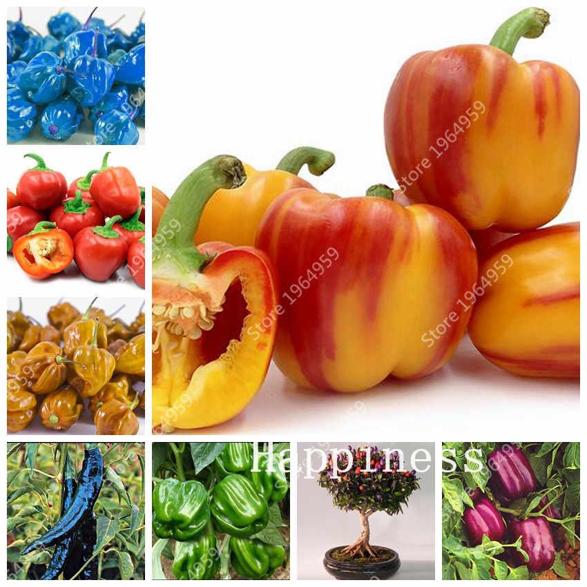 100 шт смешанный перец Питер бонсай, легко растущий Паприка Чили растения, Красный горячий чили перец экологически чистые овощные Diy Длинные горячий перец