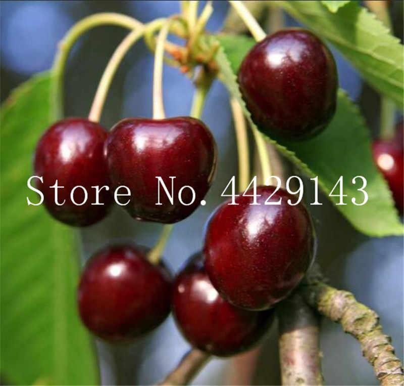 50 יחידות קשת צבע דובדבן Belle צנון בונסאי 100% אמיתי טעים ירקות עציץ בית גן צמח קל לגדול