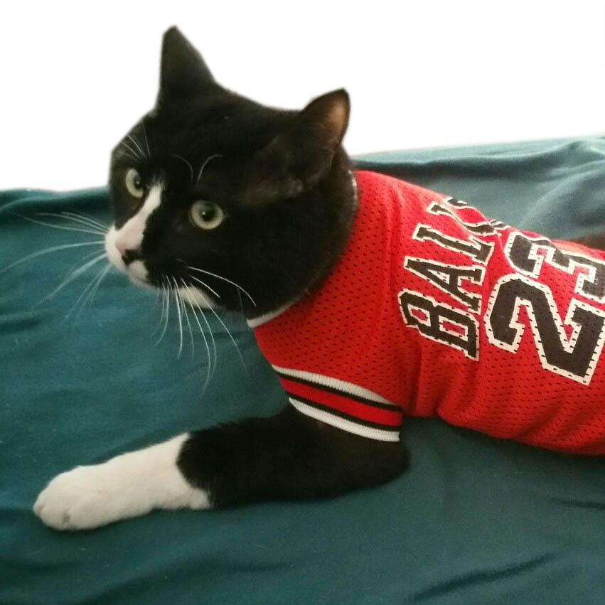 NUEVA primavera verano ropa de gato para mascotas perros del gato - Productos animales