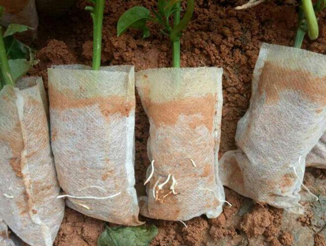 100 pcs/lot Biologisch Abbaubar Samen Kindergarten Taschen Kindergarten Blumentöpfe Gemüse Transplantation Zucht Töpfe Garten Pflanzen Kindergarten Pflanzen