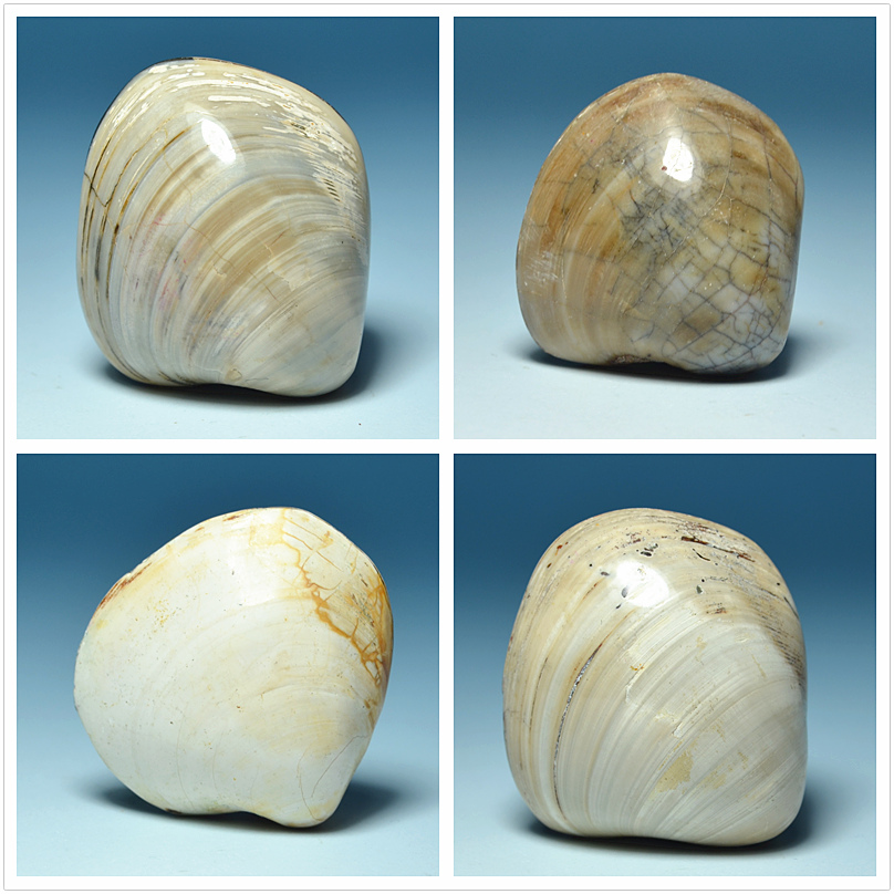 Madagascar fossil shells of native mussels teaching specimens paleontology fossils Dan H ...