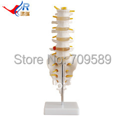 ISO Mini Size Plastic Lumbar Vertebrae and caudal vertebra Model купить в екатеринбурге переходник mini iso