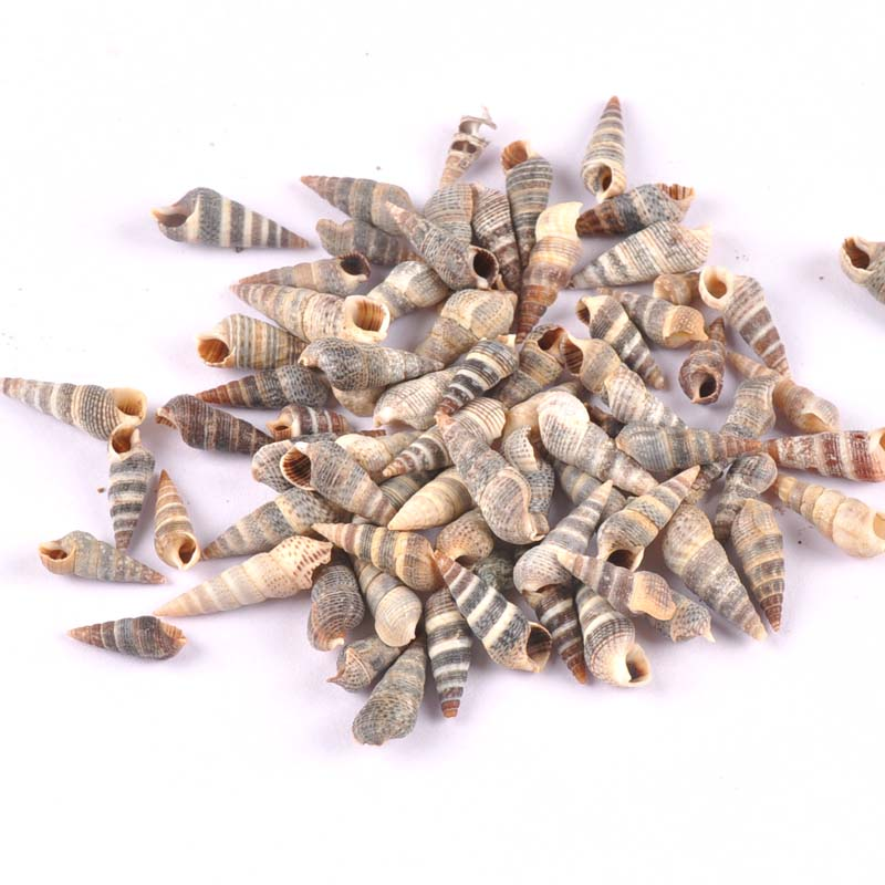 100pcs Natural Stripe Spiral Shell Scrapbooking Craft Seashells For Glass Bottle Home Diy Decoration TRS0278