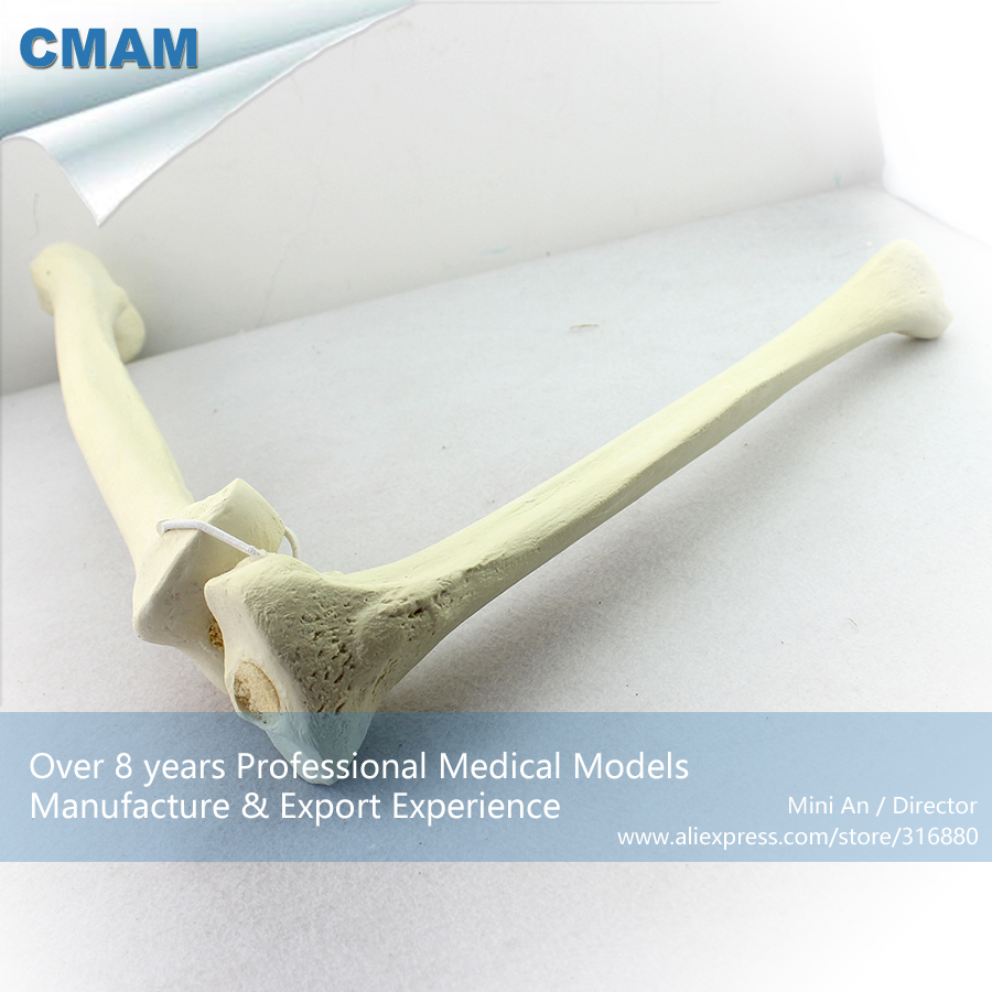 12315 CMAM-TF04 Synthetic Bones - Femur with Tibia (Left or Right) ,SWABone Models  / Skeleton of Lower Limb life size medical human femur and tibia anatomical skeleton model human skeleton and tibia model with joint gasen fzg010
