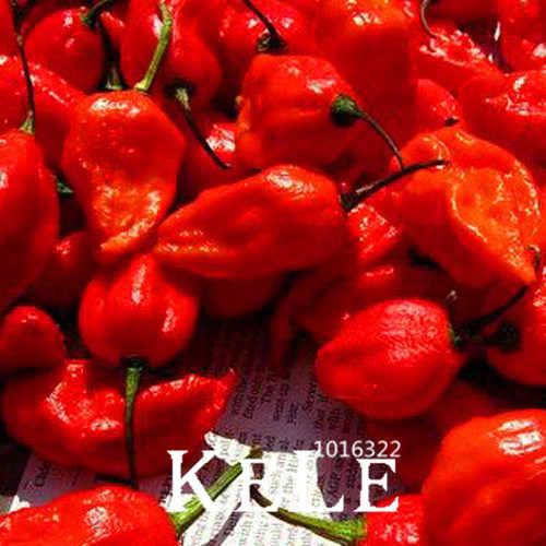 La India diablo Chile patio jardín maceta verde vegetal orgánico Bonsai Mundo Más Chili-100 unids/bolsa... # JB6NIX
