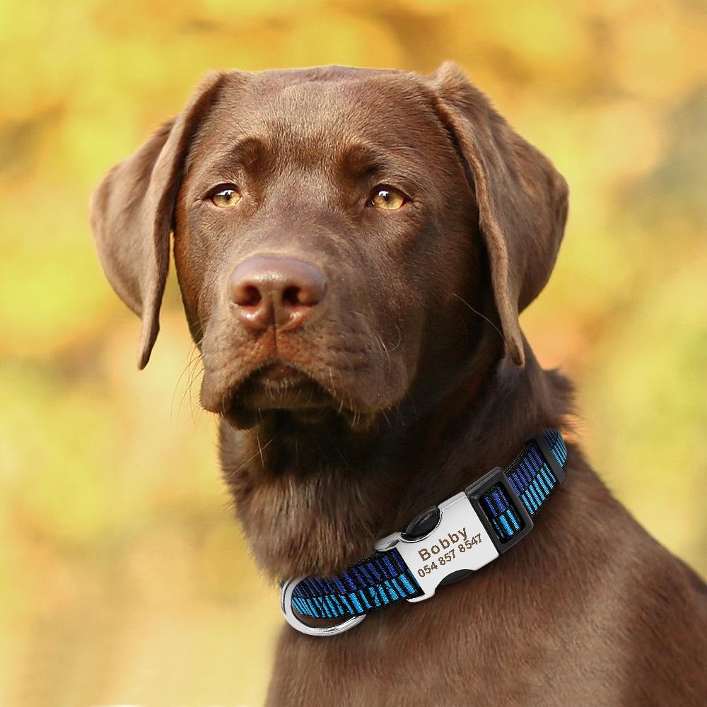 HTB1lIeAM3HqK1RjSZFEq6AGMXXay - Halsband hond met naam en telefoonnummer nylon stoer