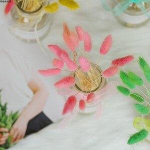 Image 5 - 15 Stks/partij Nature Droog Lagurus Ovatus Konijn Staart Gras Fotografie Achtergrond Accessoires Voor Studio Foto Home Decoratie