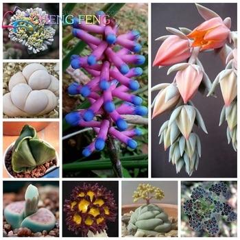 500/bag Mix Succulent bonsai Lithops Pseudotruncatella Bonsai plants bonsai for home & garden Flower pots planters