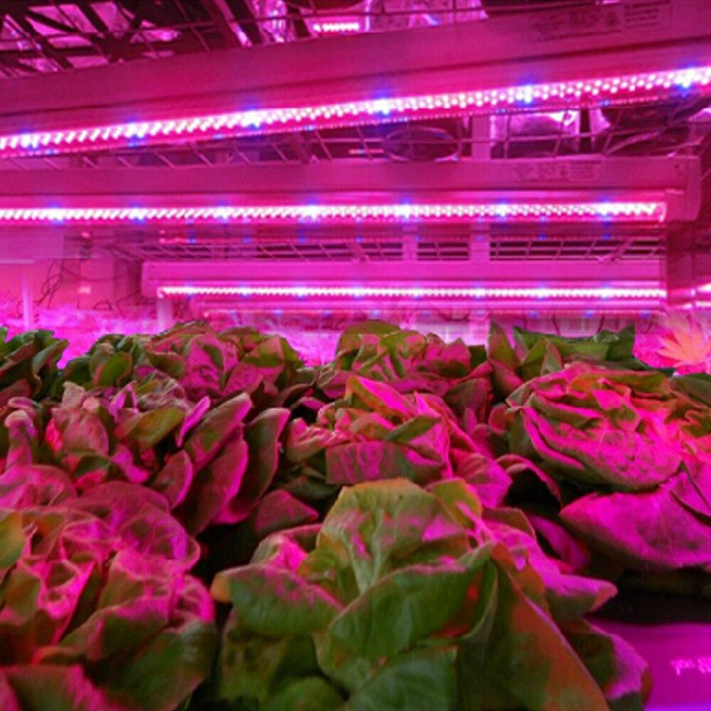Aliexpress.com : Buy Viktorovna SMD 5050 Led Plant Grow Light Red ...